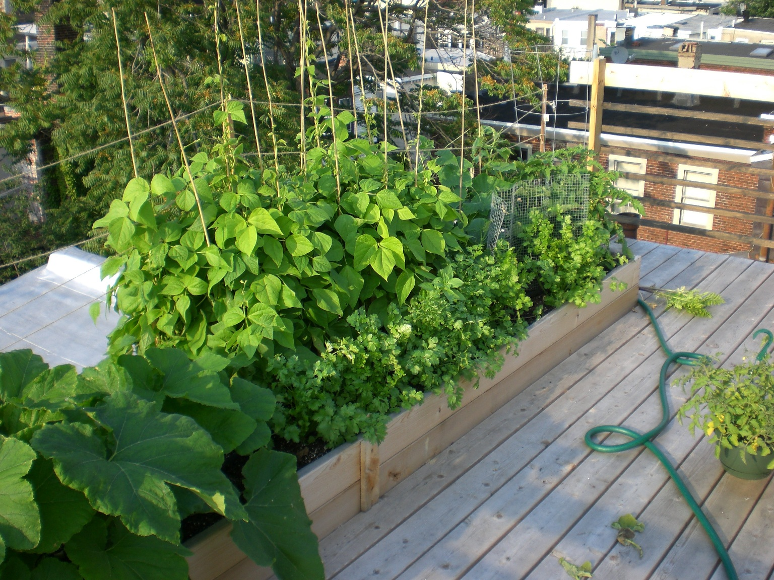 how to grow food in a rented townhouse