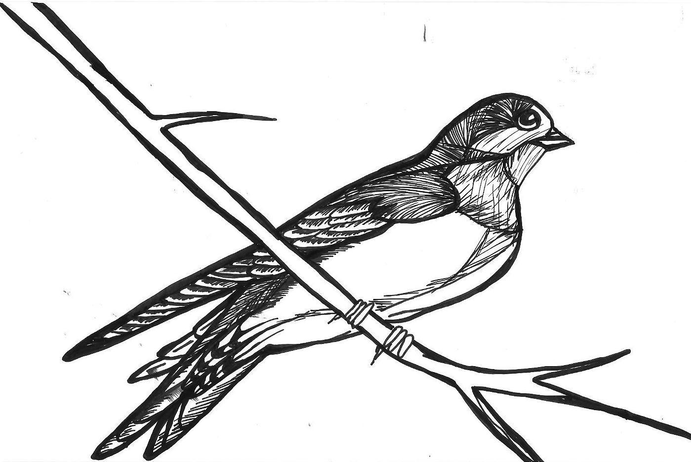 Swallow Bird Drawings