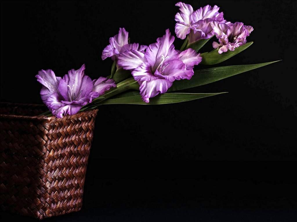 Hình nền hoa lay ơn đẹp nhất