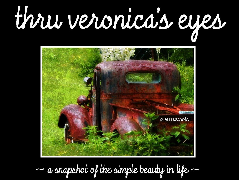thru veronica's eyes