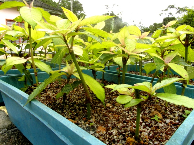 Ini adalah foto foto sebahagian evidens tanaman hiasan pelajar yang