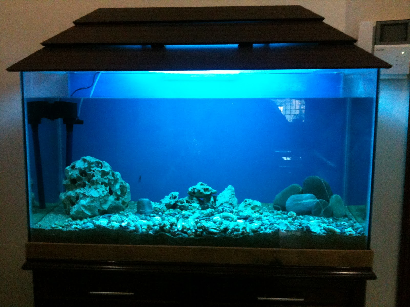 a salt water aquarium fishkeeping