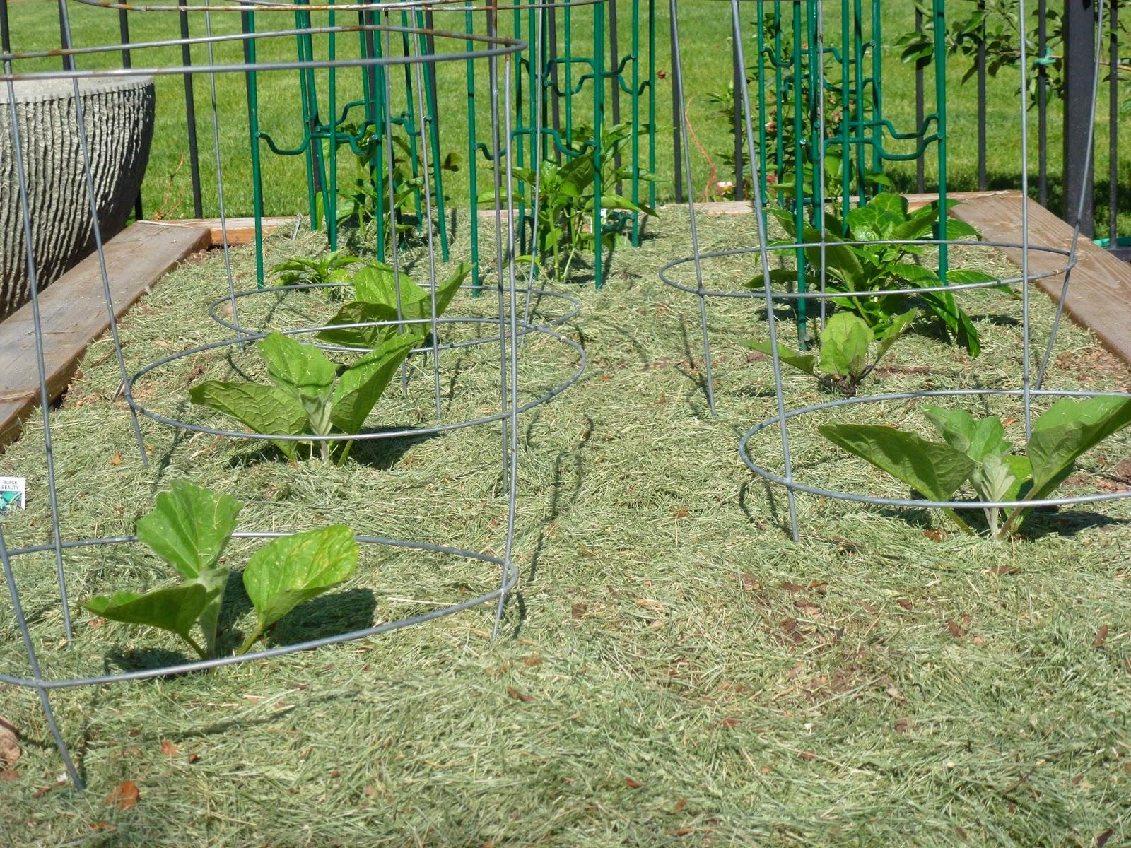 Mulch Around Raised Garden Beds