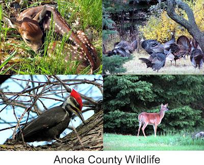 Anoka County Minnesota Wildlife by Teri Eckholm REALTOR