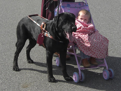 Picture of Al in harness in a stand-stay beside the stroller & baby. My sister is holding him