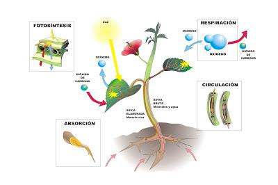 Los relatos de samid plantas fotos ntesis y respiraci n for Formas ornamentales