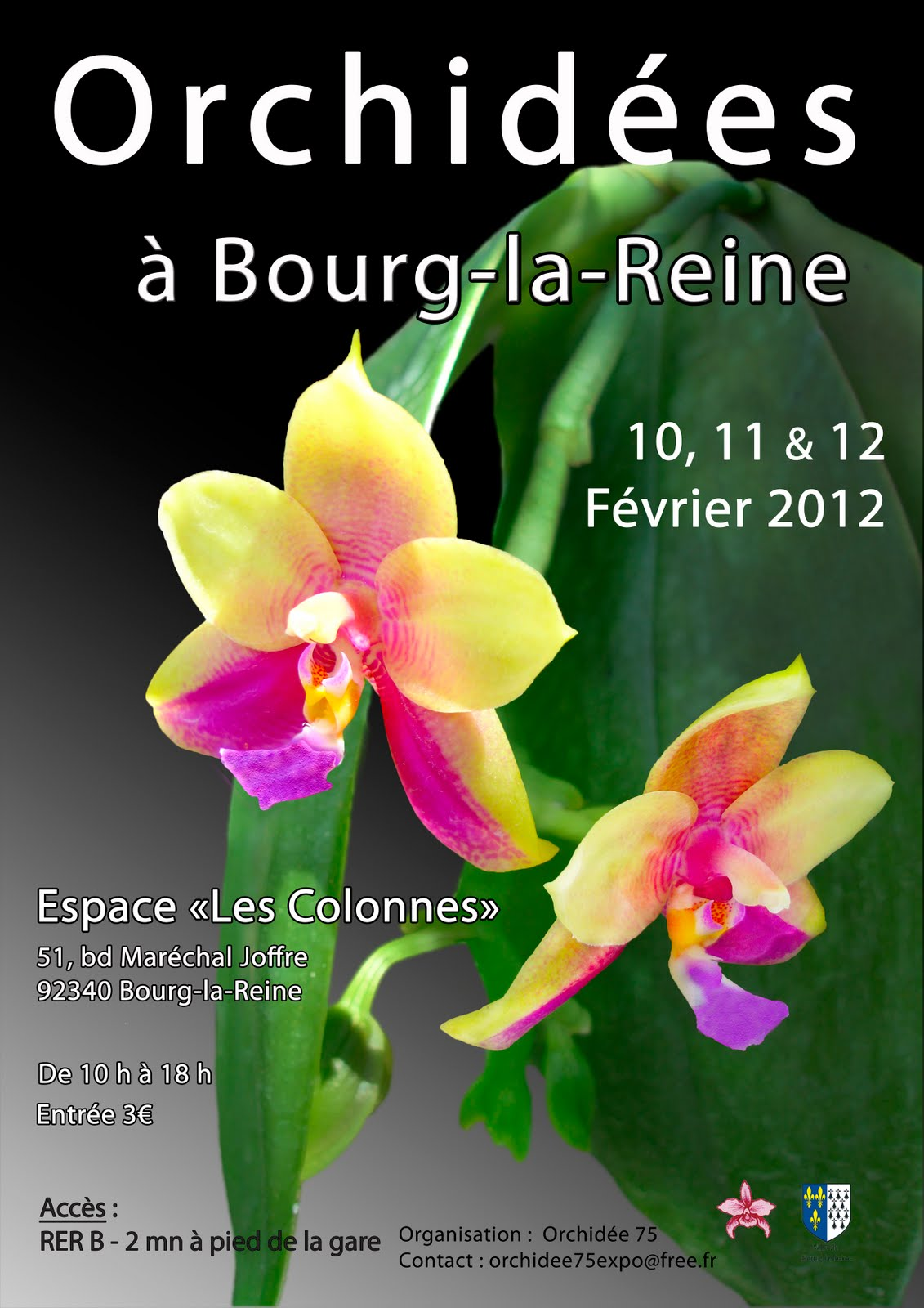 orchidee 75