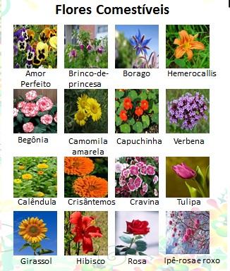 flores comest veis as maravilhas da m e natureza lista