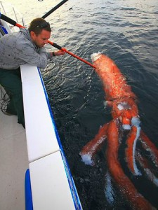 Rare Giant Squid Australia [Video]