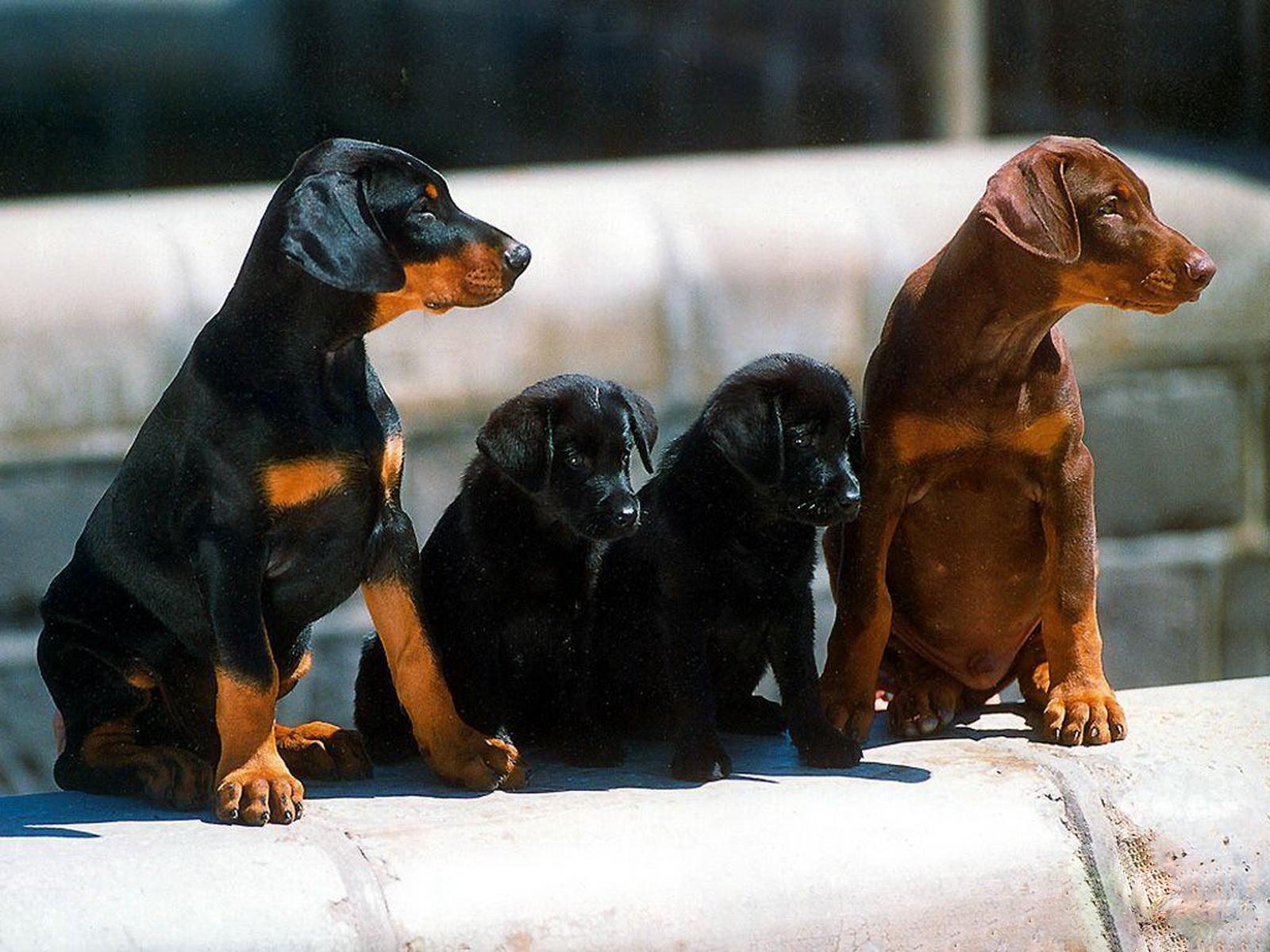 http://4.bp.blogspot.com/-Go_GspSRuyw/Tyw8PwtCkHI/AAAAAAAAA2U/st3txM26vk0/s1600/14-Cute+Dog+1600x1200.jpg