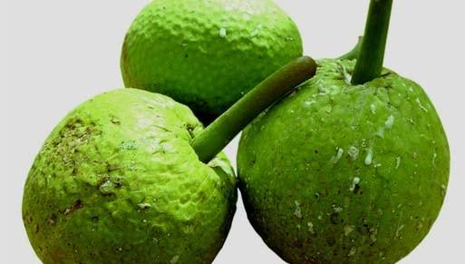 khasiat dan manfaat buah sukun bagi kesehatan