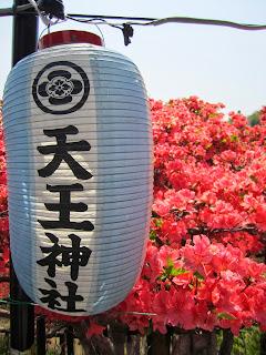 Shichinohe Tennou Jinja (Shrine) Azalea Festival 七戸町天王神社つつじまつり