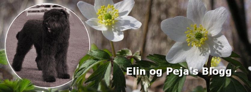 Elin og Peja's blogg