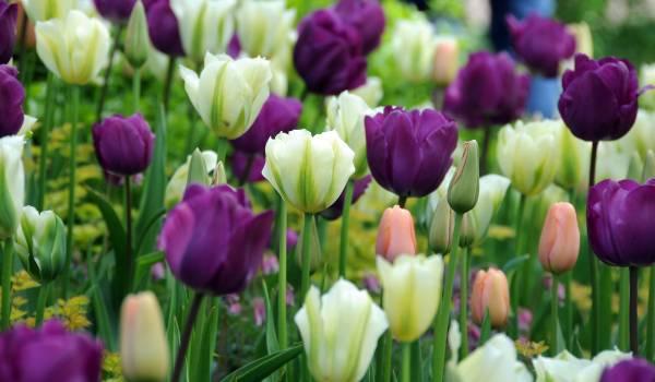 Conhecido também por Jardim Europa, todo ano 7 milhões de flores