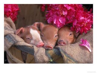 Tres cerditos en una cesta