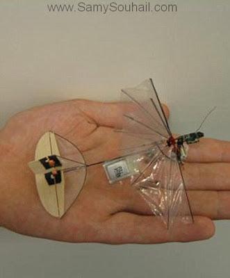حشرة الجاسوس