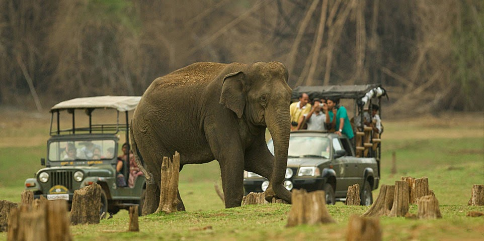 Nagarhole National Park,Kabini