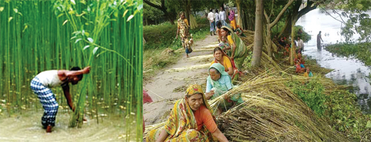 rainy season in bangladesh essay