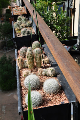 Three cacti window flower boxes on a row