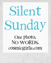 http://www.cosmicgirlie.com/2014/01/05/silent-sunday-45/