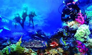 Tempat Wisata di Manado - Taman Laut Bunaken