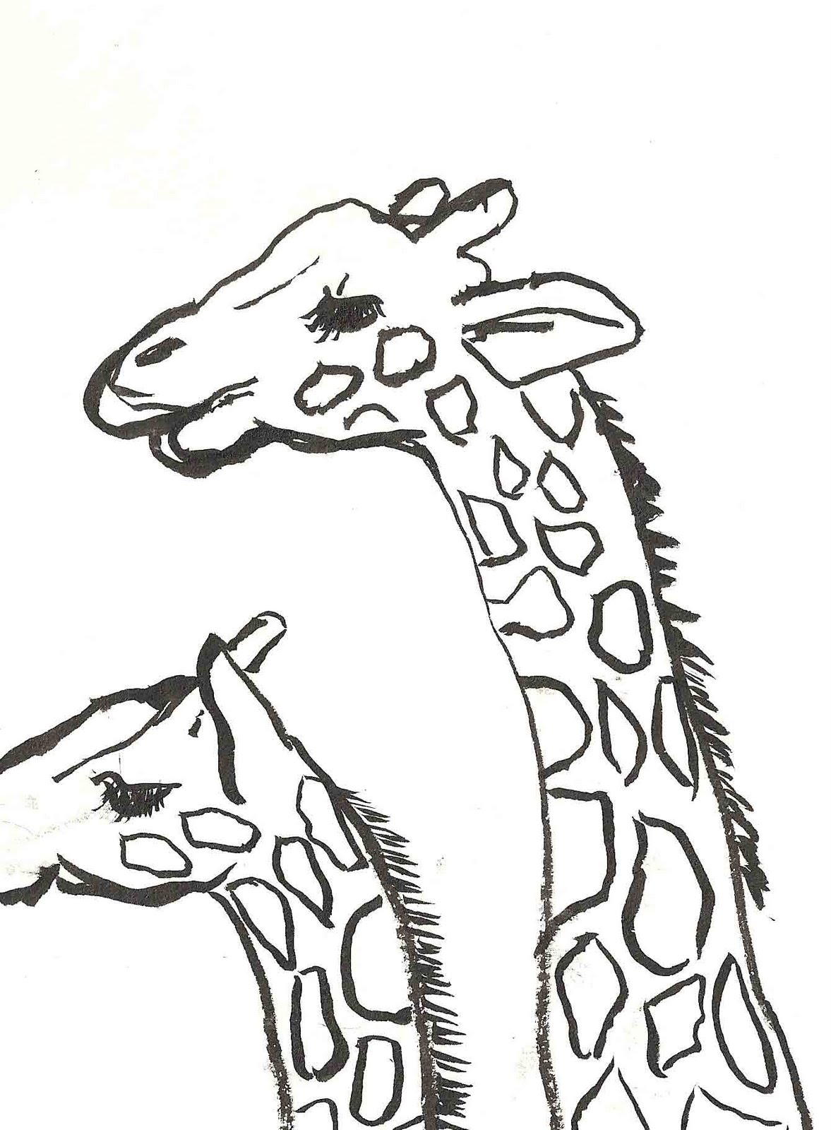 have dogs will travel taronga zoo sketches