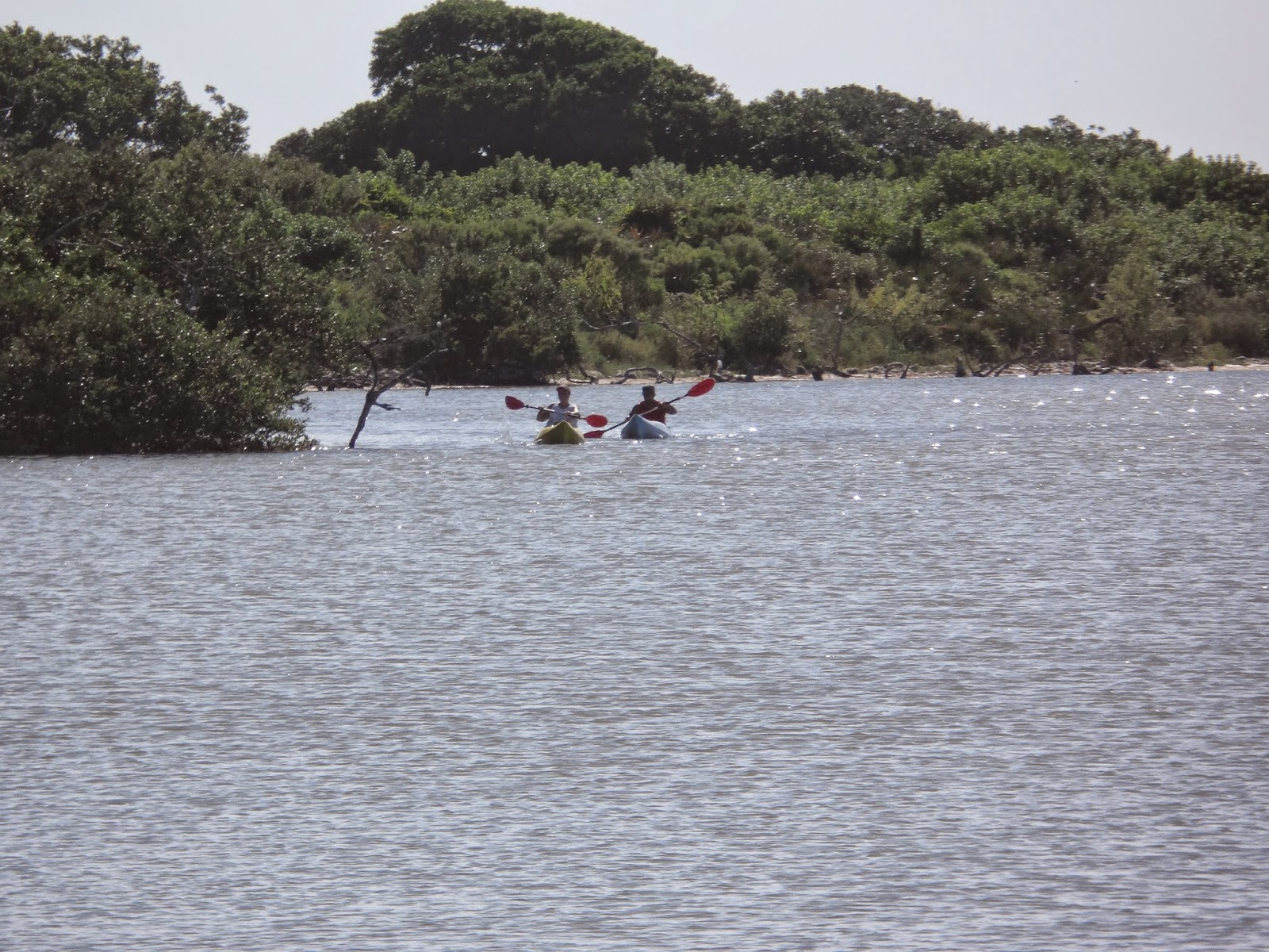 Mosquito lagoon indian river fishing labor day scouting for Indian river fishing