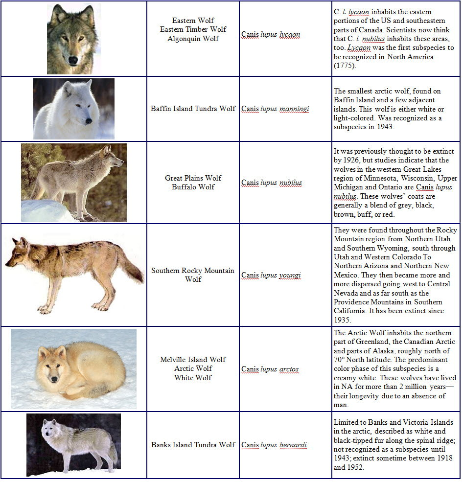 Species and Subspecies Sp003