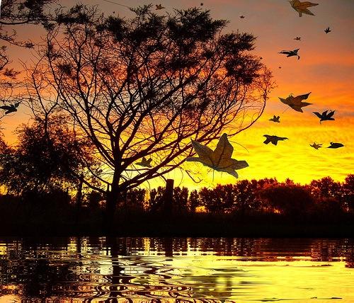 ... Y caen las hojas, llega ....¡¡¡ EL Otoño !!! - Página 4 Paisajes+de+oto%25C3%25B1o-d4