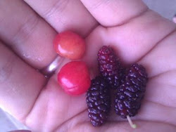 Red Cherries and Mulberries