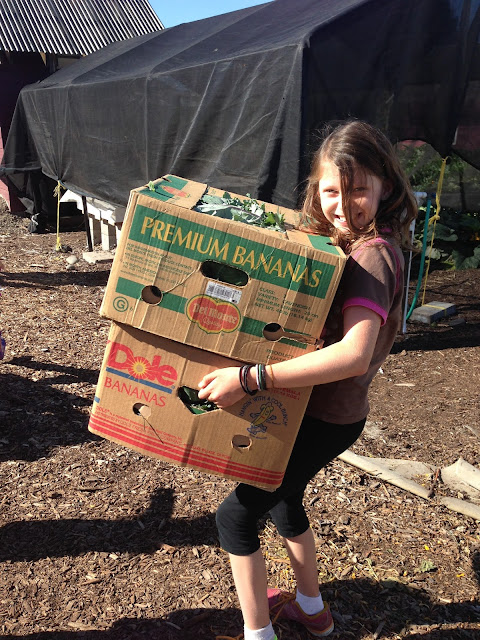 carrying boxes in the grassroots garden eugene oregon