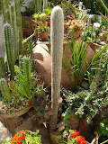 Del jardín de cactus (La Murada)