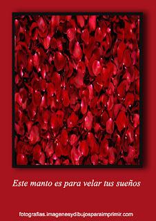petalos rosas rojas Fotos de rosas rojas para facebook