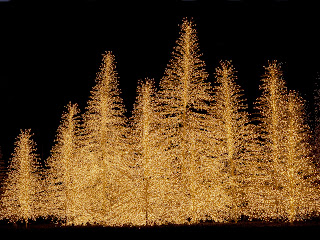 Free Download Light of Christmas Trees Wallpaper