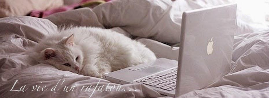 La vie d'un chat errant...