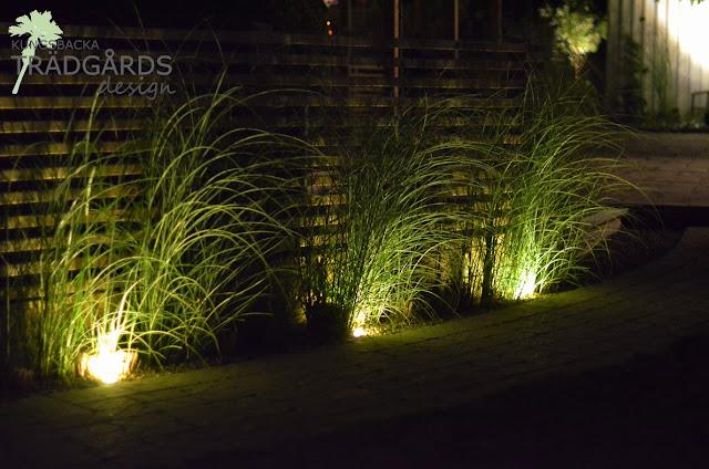 Belysning i växtligheten mot ett staket hjälper till att se trädgårdens gränser inifrån
