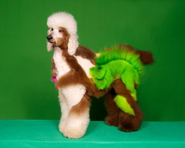 Ren Netherland fotografia animais estimação cães cachorros extreme pets fantasia Iguana