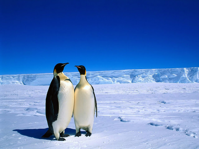 Download Hd Penguin Images backgrounds 1024x764
