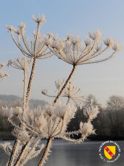MESSEIN (54) - Les étangs saisis par le gel : l'étang Mercier