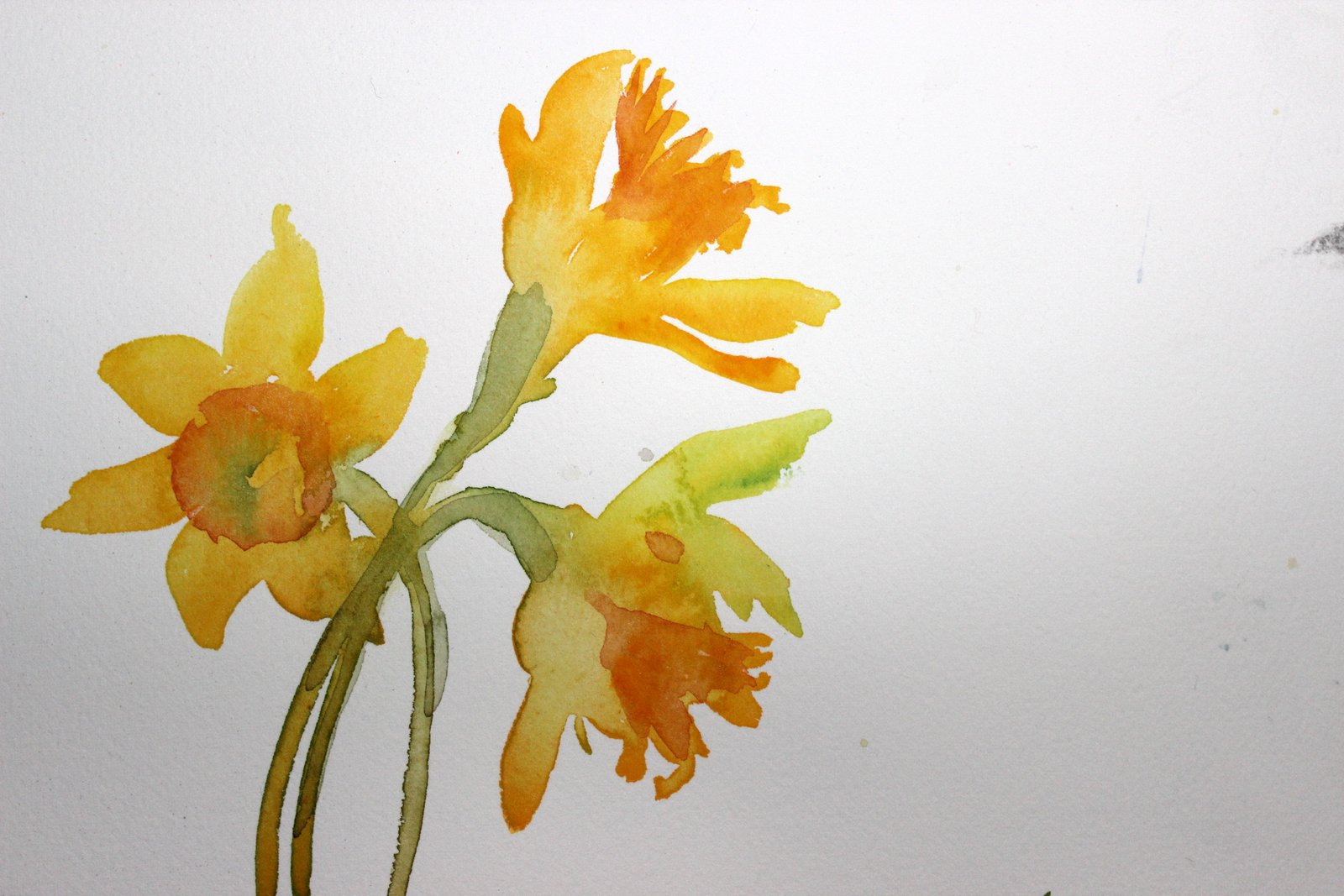 laura's watercolors: final daffodils '13