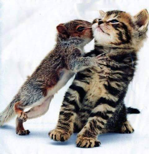 Oh come on let me kiss you cute cat and squrrel