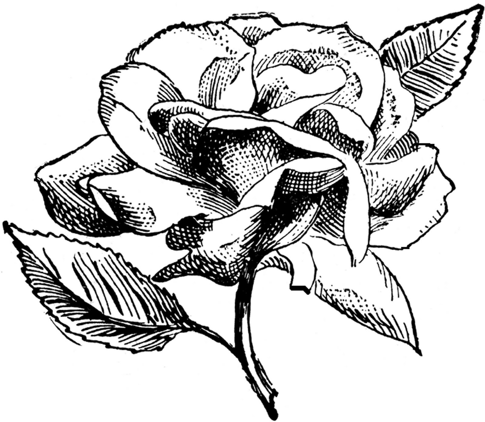 Click to download save jpg image    Vintage Rose Clip Art