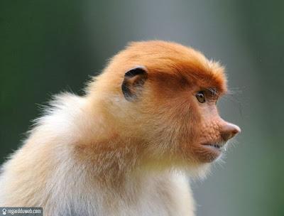 Images drôles et insolites catégorie Animal - Singe v1