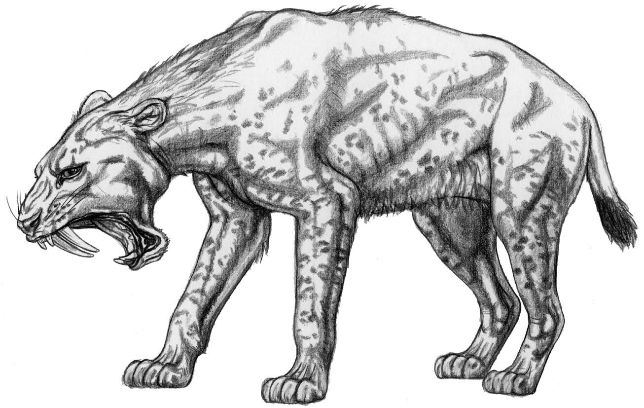 Fossilien Welt Taschenbücher über Exotische Tiere Am Ur Rhein