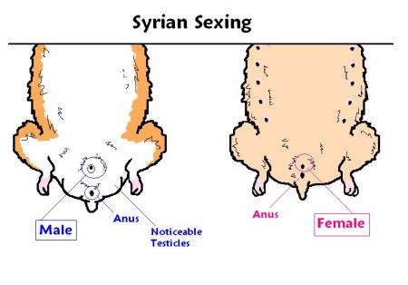 Difference between vaginal sex and anal