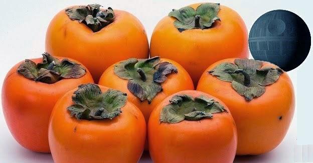 persimmon kaki diospyros