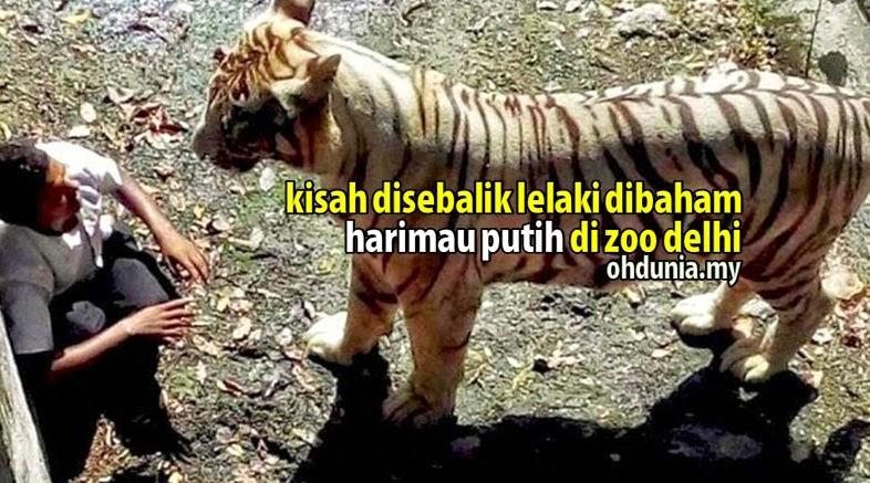 Kisah Disebalik Lelaki Dibaham Harimau Putih Di Zoo New Delhi, India