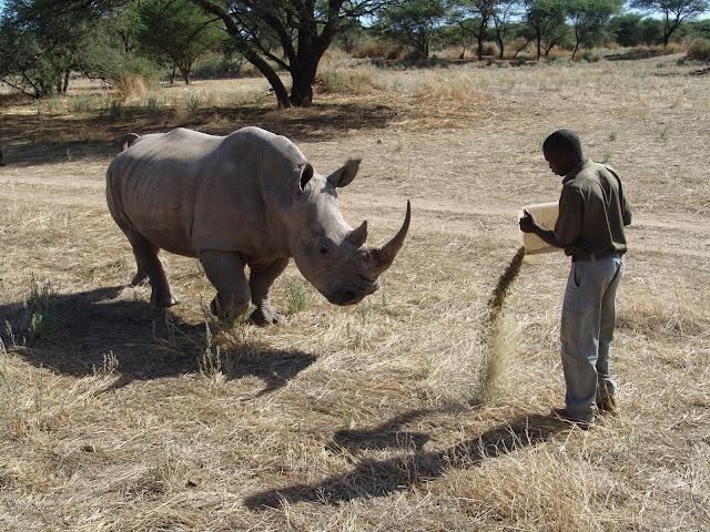 Rhino Namibia