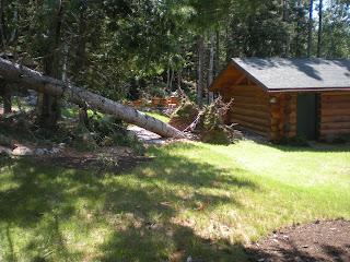 Ely Minnesota storm July 4th 2012, Uprooted Pine, http://huismanconcepts.com/