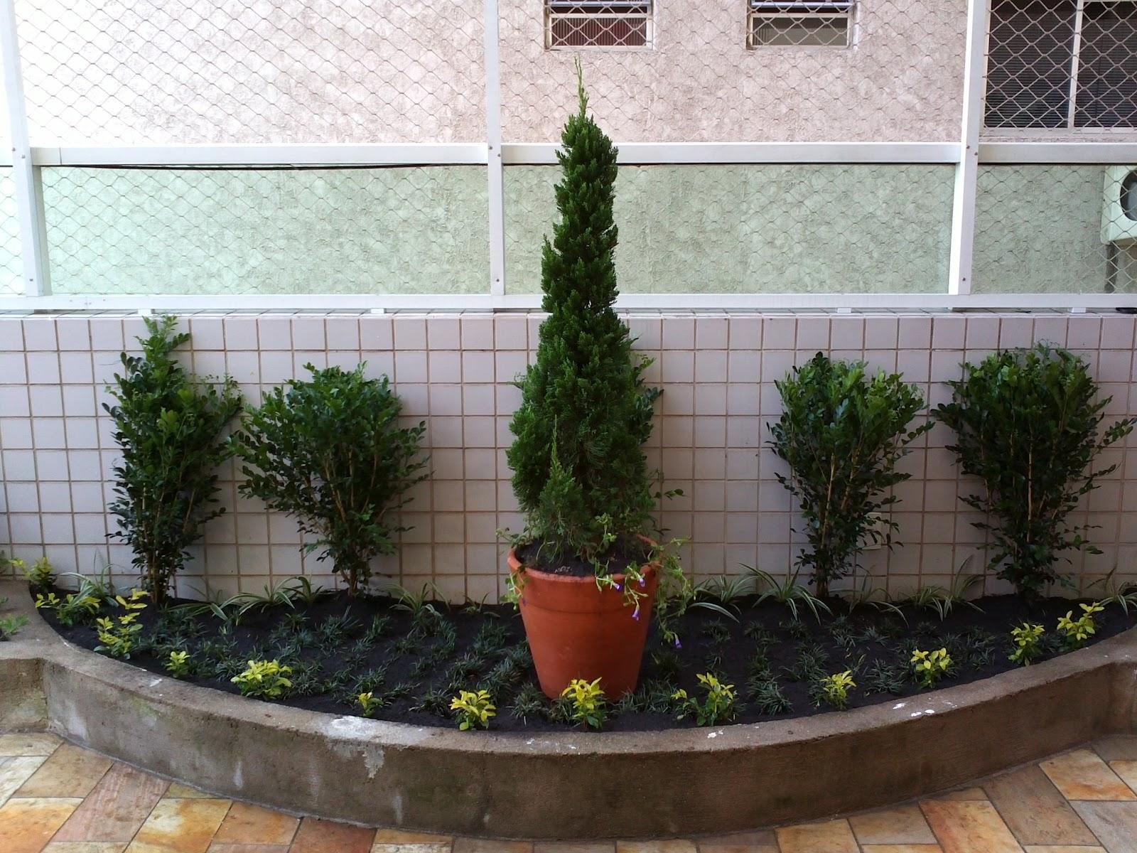 mini jardins pedra viva:Detalhe para o vaso com Kaizuka, no fundo parede viva com murta e